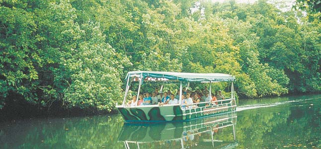 How About A Daintree River Crocodile Tour